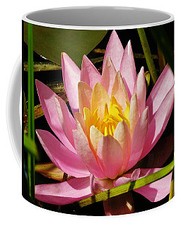 Pink Water Lily Coffee Mug by Sherman Perry