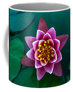 Rose Waterlily Coffee Mug