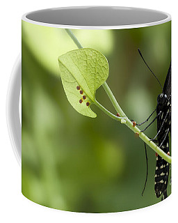 Coffee Mug featuring the photograph Pipevine Swallowtail Mother With Eggs by Meg Rousher