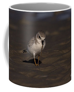 Piping Plover Photo Coffee Mug