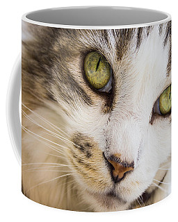 Coffee Mug featuring the photograph Pixie-bob 1 by Leigh Anne Meeks