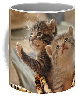 Playful Kittens Coffee Mug