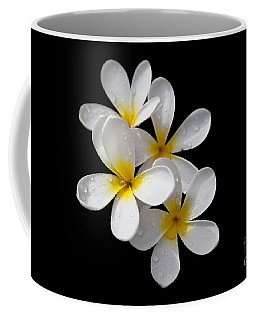 Coffee Mug featuring the photograph Plumerias Isolated On Black Background by David Millenheft