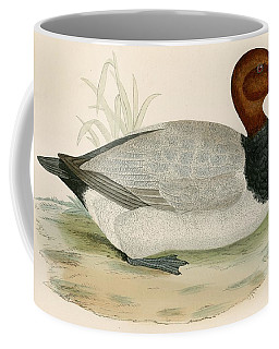 Pochard Coffee Mugs