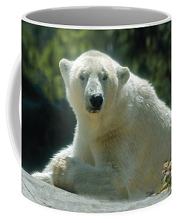 Polar Bear Portrait Coffee Mug