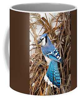 Portrait Of A Blue Jay Coffee Mug