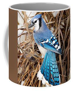 Portrait Of A Blue Jay Square Coffee Mug
