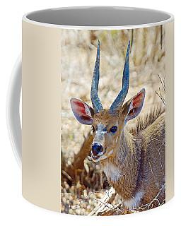 Portrait Of A Bushbuck In Kruger National Park-south Africa  Coffee Mug