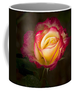 Portrait Of A Double Delight Rose Coffee Mug