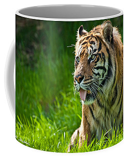 Coffee Mug featuring the photograph Portrait Of A Sumatran Tiger by Jeff Goulden
