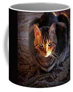 Portrait Of A Tabby Cat With Sunlight Coffee Mug