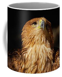 Portrait Of An Eastern Imperial Eagle Coffee Mug