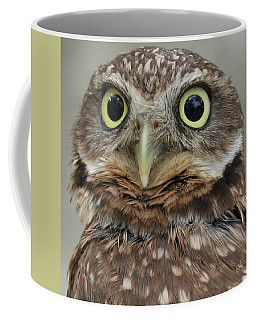 Portrait Of Burrowing Owl Coffee Mug