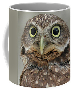 Portrait Of Burrowing Owl Coffee Mug by Ben and Raisa Gertsberg