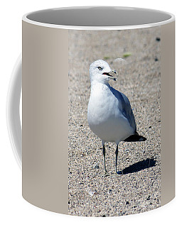 Coffee Mug featuring the photograph Posing Gull by Debbie Hart