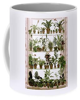 Potted Plants On Shelves Coffee Mug