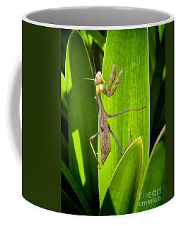 Coffee Mug featuring the photograph Praying Mantis by Kasia Bitner