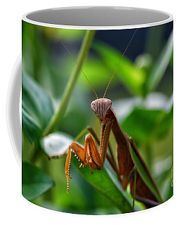 Coffee Mug featuring the photograph Praying Mantis by Thomas Woolworth