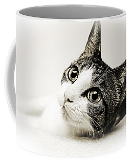 Precious Kitty Coffee Mug