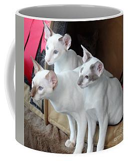 Prize Winning Triplets Coffee Mug