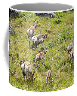 Coffee Mug featuring the photograph Pronghorn Antelope In Lamar Valley by Belinda Greb