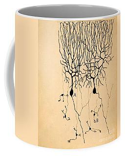 Purkinje Cells By Cajal 1899 Coffee Mug by Science Source