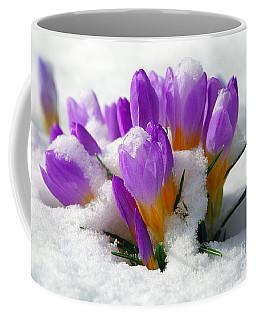 Purple Crocuses In The Snow Coffee Mug by Sharon Talson
