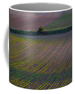 Coffee Mug featuring the photograph Purple Fields by Evelyn Tambour