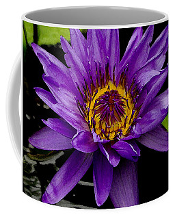 Coffee Mug featuring the photograph Purple Lotus Water Lilies by James C Thomas