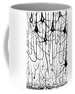 Pyramidal Cells Illustrated By Cajal Coffee Mug by Science Source