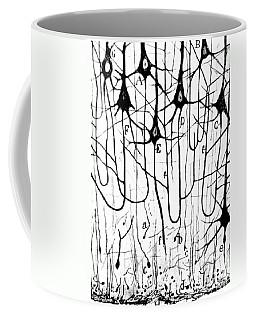 Pyramidal Cells Illustrated By Cajal Coffee Mug