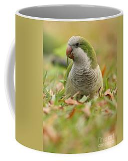 Quaker Parrot #3 Coffee Mug