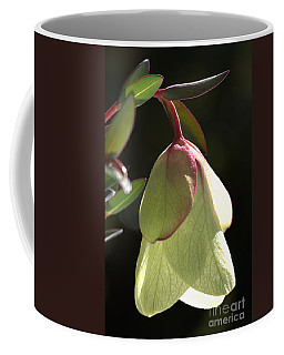 Qualup Bell Flower  Coffee Mug