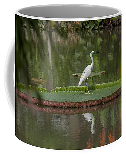 Queen Victoria Water Lily Pad With Little Egret Dthb1618 Coffee Mug