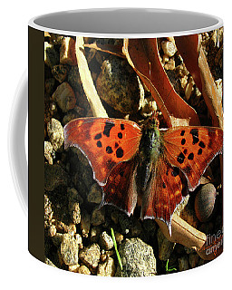 Question Mark Butterfly Coffee Mug by Donna Brown