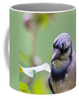 Quizzicle Blue Jay Coffee Mug