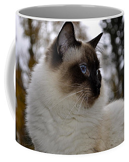 Ready For My Closeup Coffee Mug by Cathy Mahnke