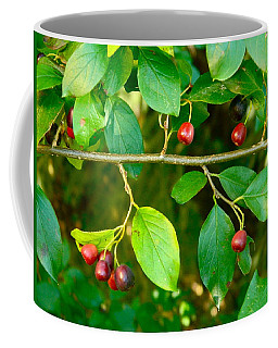 Red And Black Berries Coffee Mug