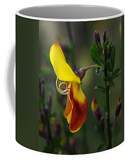 Coffee Mug featuring the photograph Red And Yellow Scotchbroom by Adria Trail
