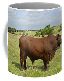 Red Angus Bull Coffee Mug by Charles Beeler