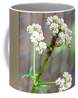 Red Ants And Valerian Officinalis Coffee Mug