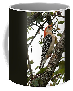 'red-bellied Woodpecker' Melanerpes Carolinus  Coffee Mug