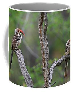 Red-billed Hornbills Coffee Mug