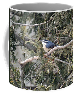 Coffee Mug featuring the photograph Red Breasted Nuthatch by Brenda Brown