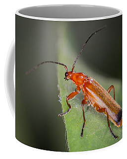 Red Cardinal Beetle Coffee Mug