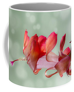 Red Christmas Cactus Bloom Coffee Mug