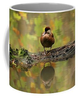 Red-crested Pochard Coffee Mugs