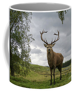 Red Deer Stag - Monarch Of The Glen Coffee Mug
