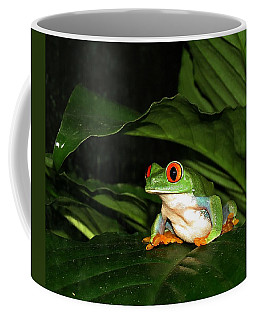Red Eyed Green Tree Frog Coffee Mug by MTBobbins Photography
