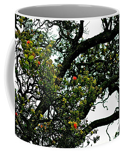 Red Ohia Lehua Tree Coffee Mug